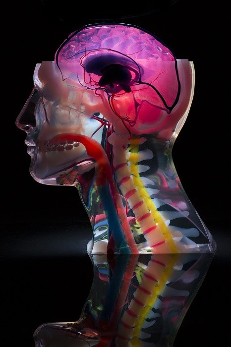 Medical models can show finesse and detail [Image: Stratasys]