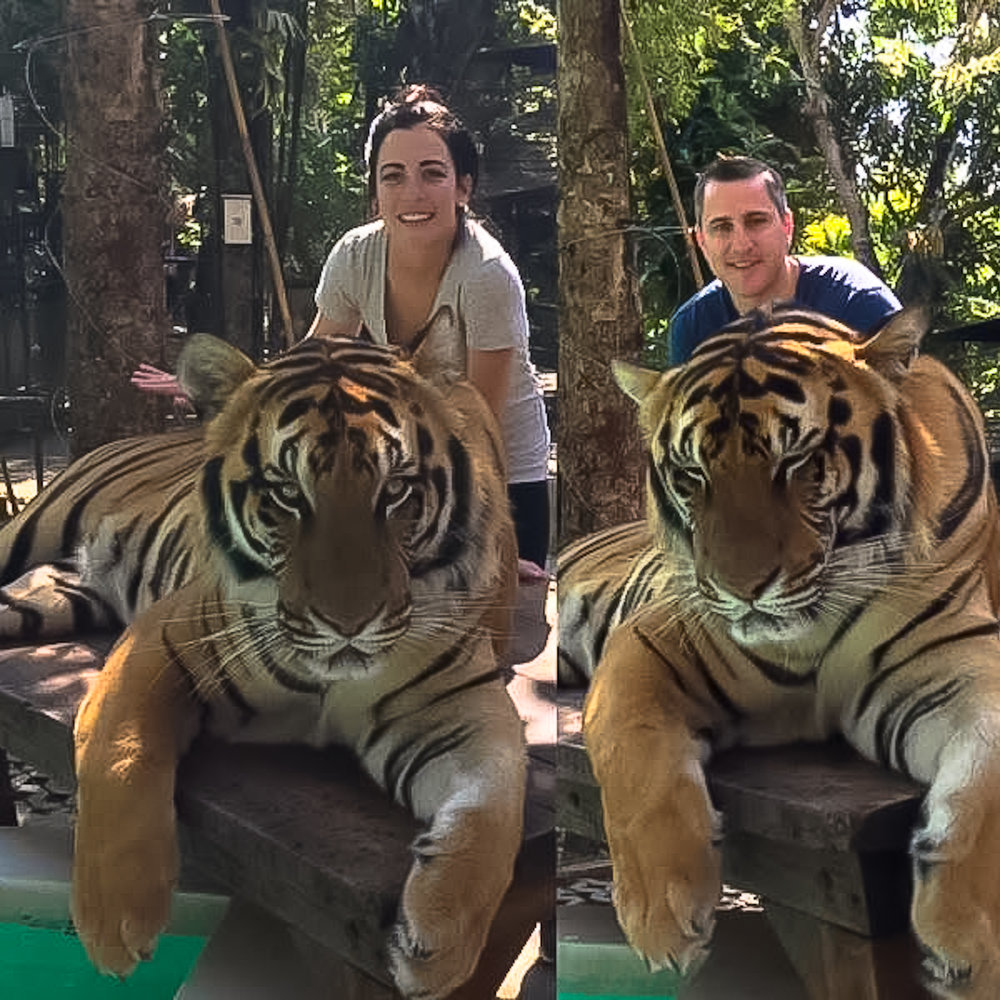 2017 Thailand Bower Tiger 1 wm.jpg