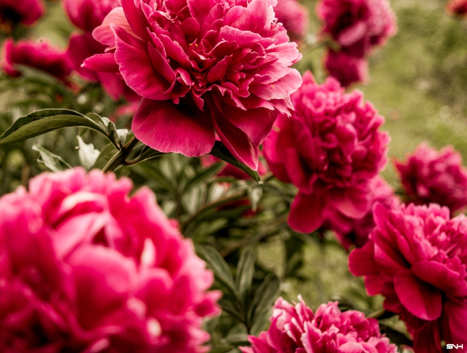 pink field really close.jpg