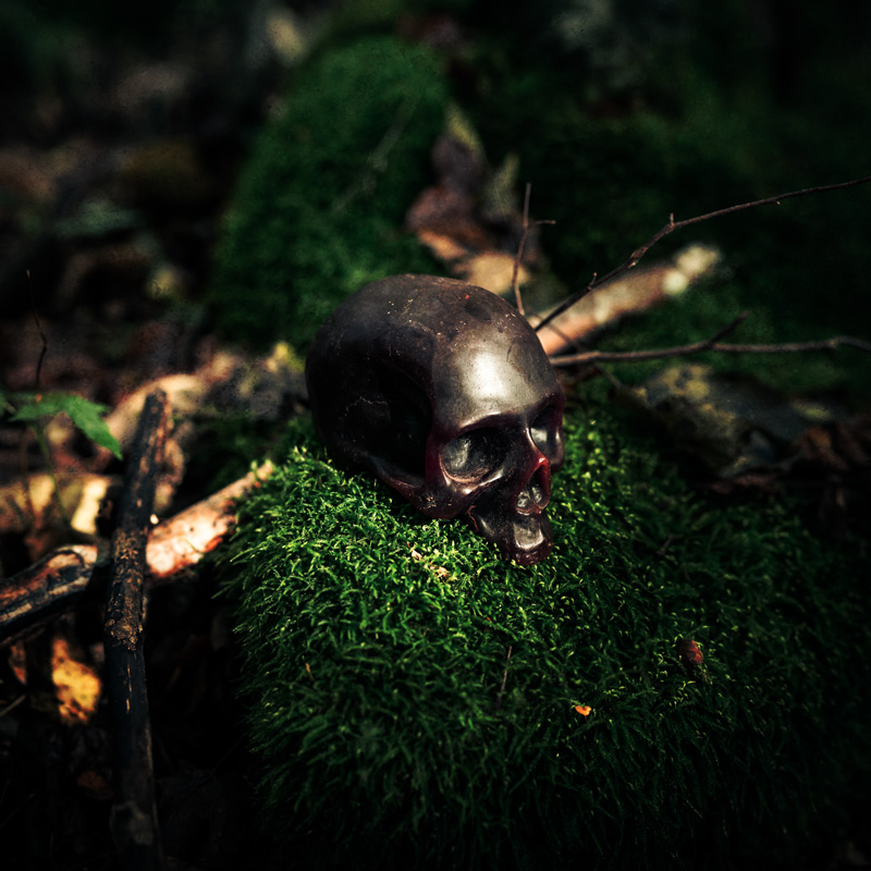 Skull in the forest by photographer Simon Whitehead