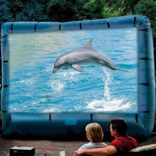 I really love Dolphins !