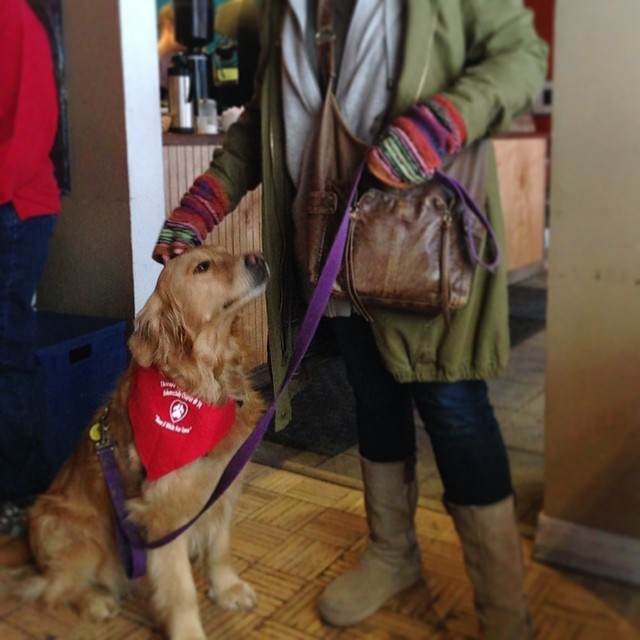 Shelby the Therapy Dog at Paws for a Cause with @theautisminitiative 🐾 #pettherapy #therapydogs