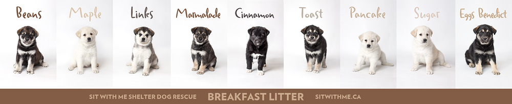 The Breakfast Litter