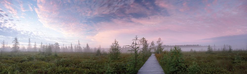 Mer Bleue Bog panoramic canvas   $300.00  63 inches W x 18 inches H x .75 inch D Large panoramic photo wrap canvas of Mer Bleue Bog in the Ottawa's Greenbelt.