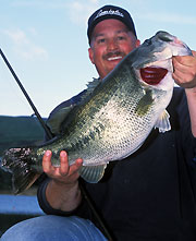 Bill Siemantel believes post-spawn bass are more interested in suspending, and rigs his Flukes from the side to create glide action and directional changes.  Photo: Bill Siemantel.