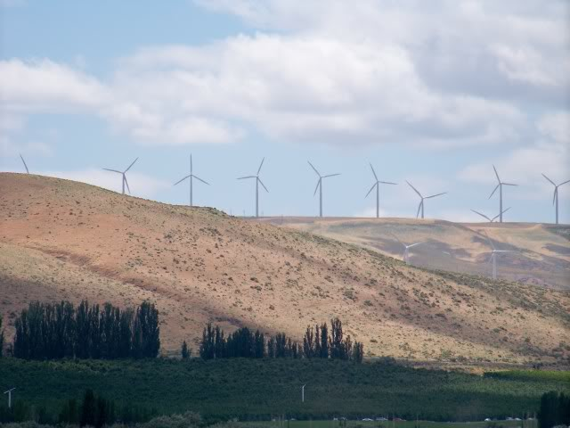 Apple Orchards below the wind turbines