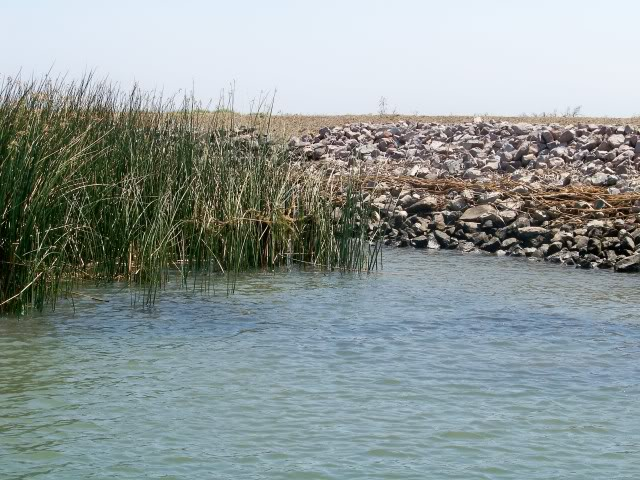 Prime spot, rock levee with a tulle edge and submerged vegetation (dark areas in the water) out from the levee. Look for the bass between the levee and the vegetation next to the tulles