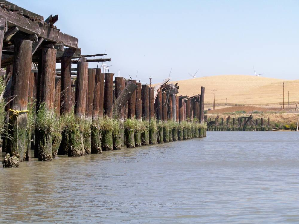 Dock pilings reveal the high tide mark near the Collinsville cement factory