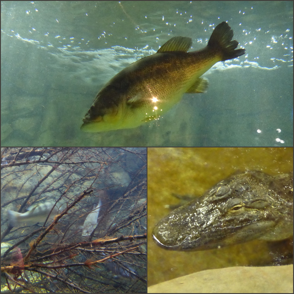 BPS Fish Collage.jpg