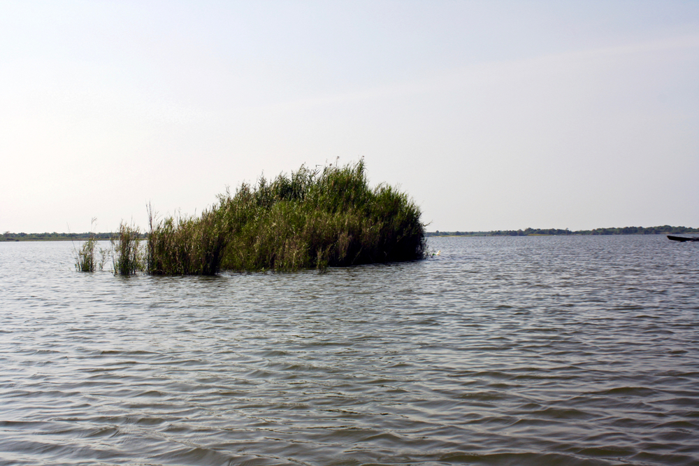 Pic. 2. Wind-blown isolated bushes such as these in Air Kuning can be fish magnets during certain periods of the day.