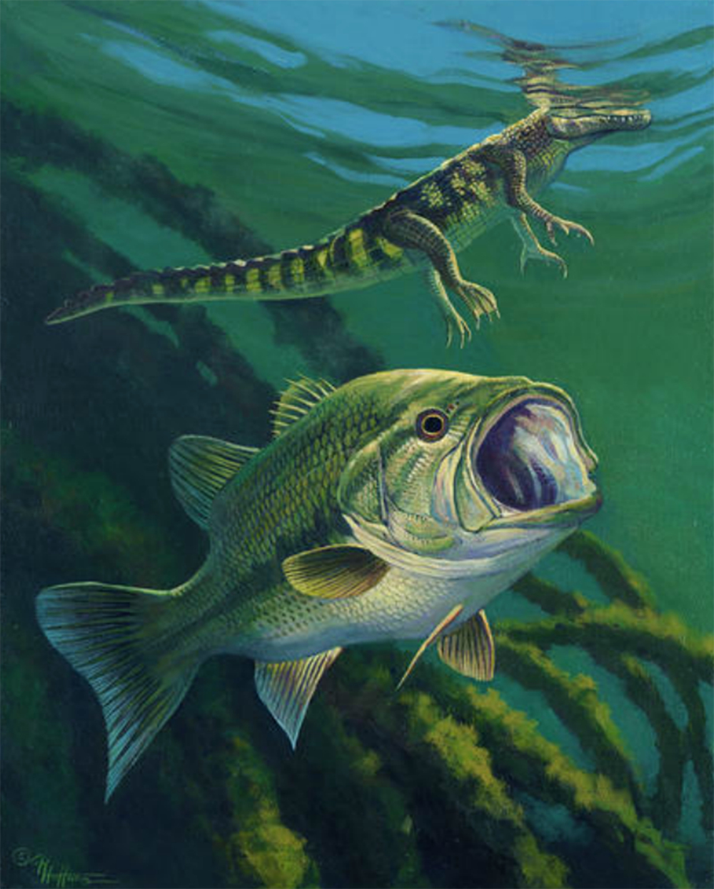"""Unaware"" - Largemouth Bass and Baby Alligator"