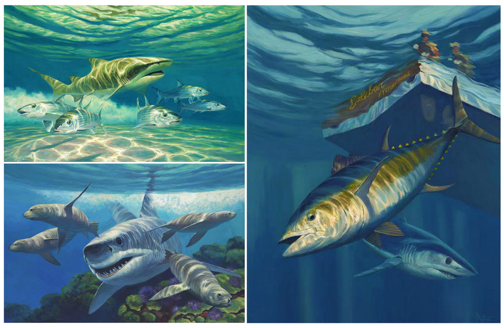 "Right to left clockwise; ""Under The Caliban"", ""White Pointer"" – Great White Shark and Sea Lions, ""Lemonade"" – Lemon Shark chasing Bonefish"