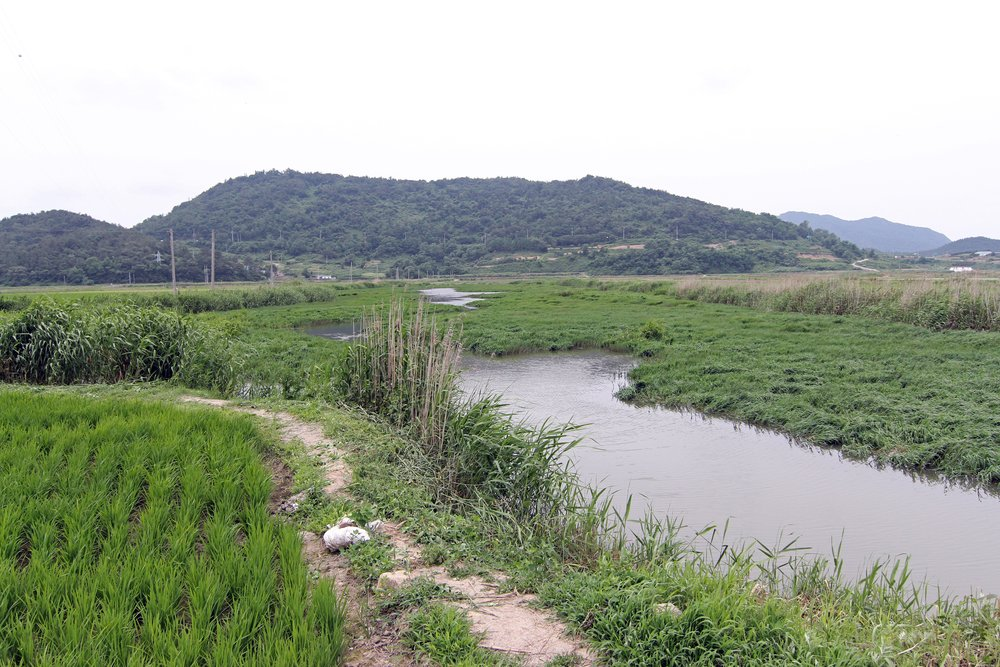 Pic. 5. One of Yeongsan River's fishy looking creeks
