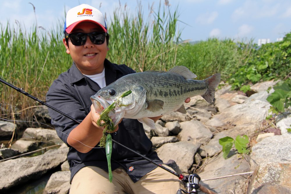 Pic. 12. Kang caught all his big bass in shallow hydrilla flat at Geumho Lake
