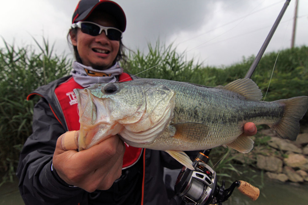 Pic. 8.  Keeper size largemouths are abundant in certain areas.
