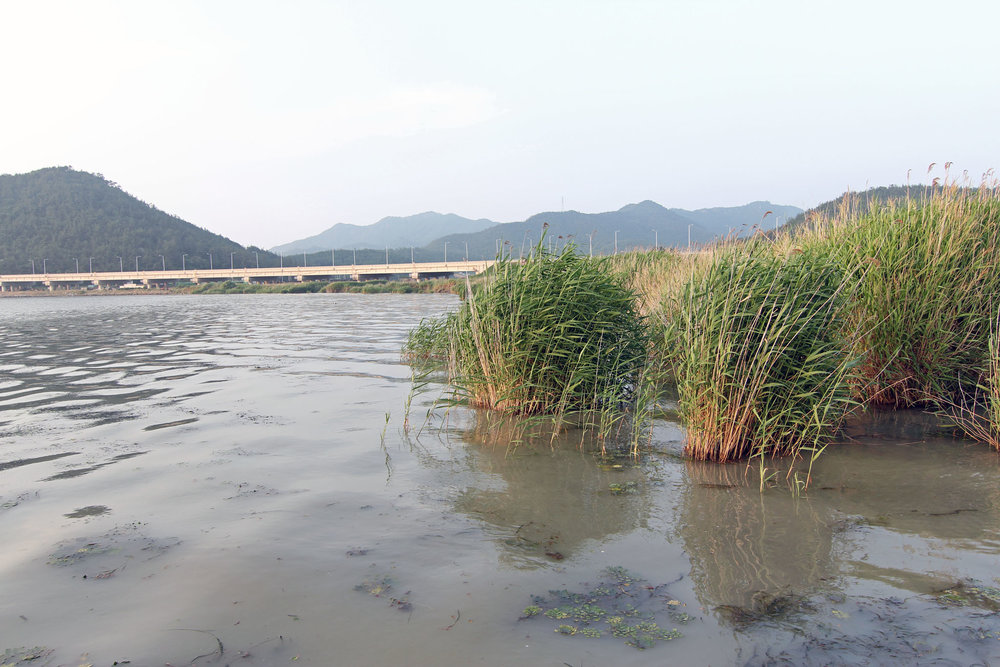 Pic. 12.  South Korea's Yeongsan River Delta is a pretty diverse tidal fishery.