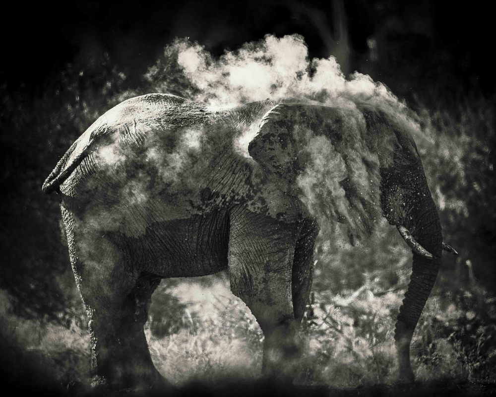 """Dust"" Was awarded an Honorable Mention for Nature and Wildlife in the International Photographer of the Year competition"