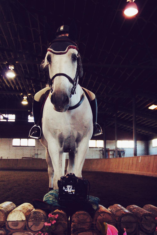 horseandcamera.jpg
