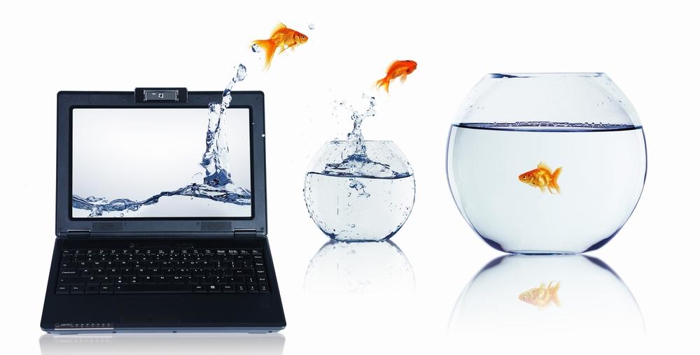 fish eye to eye.jpg