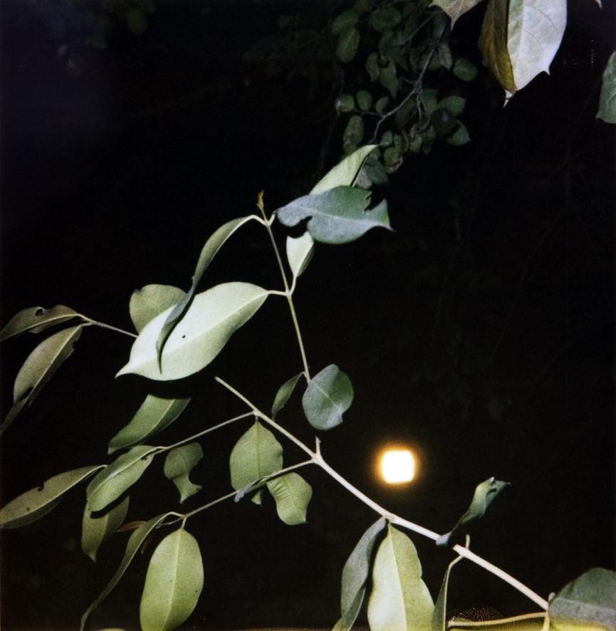 leafs_MG_0066bnf.jpg