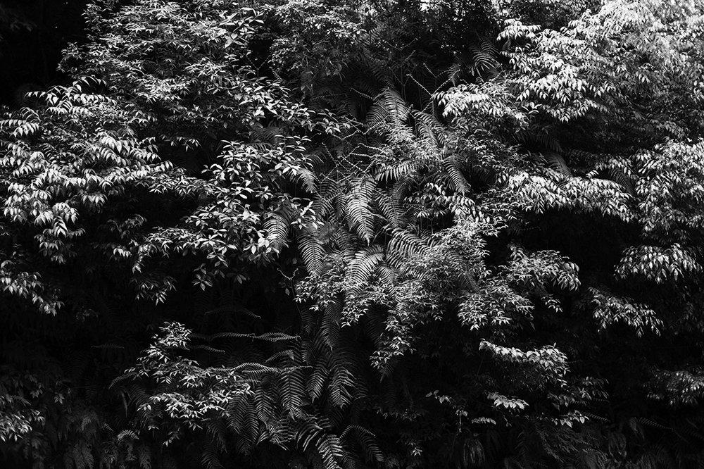 02. kyoto__DSC_2779.jpg