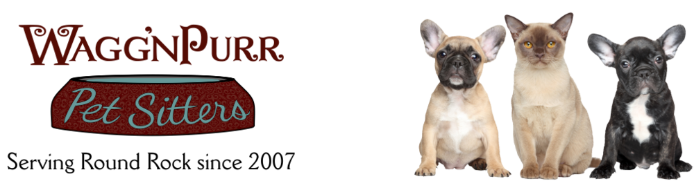 Wagg Npurr Pet Sitters Exceptional Pet Sitting Round Rock Tx