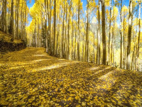The golden Autumns of Arizona