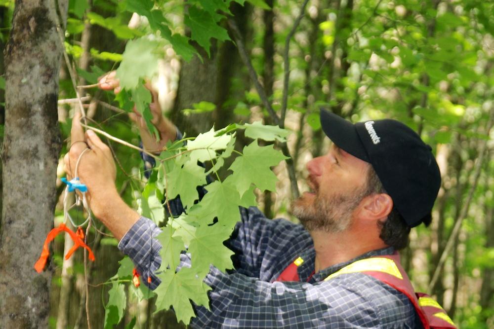 Forestry Day.jpg