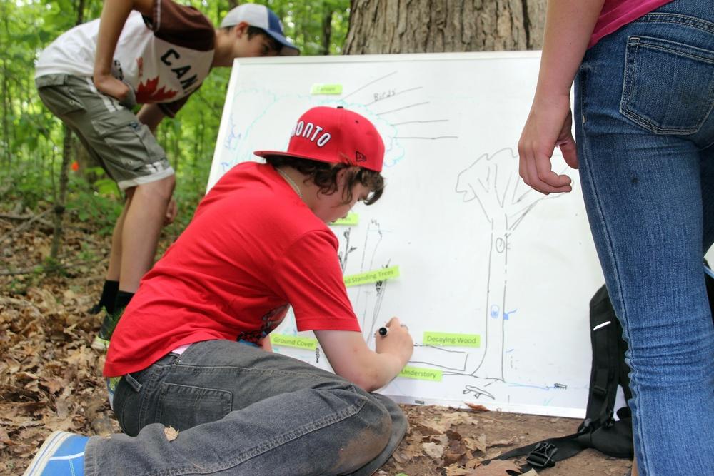 Forestry Day 6.jpg