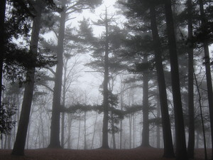The Old Growth Forest