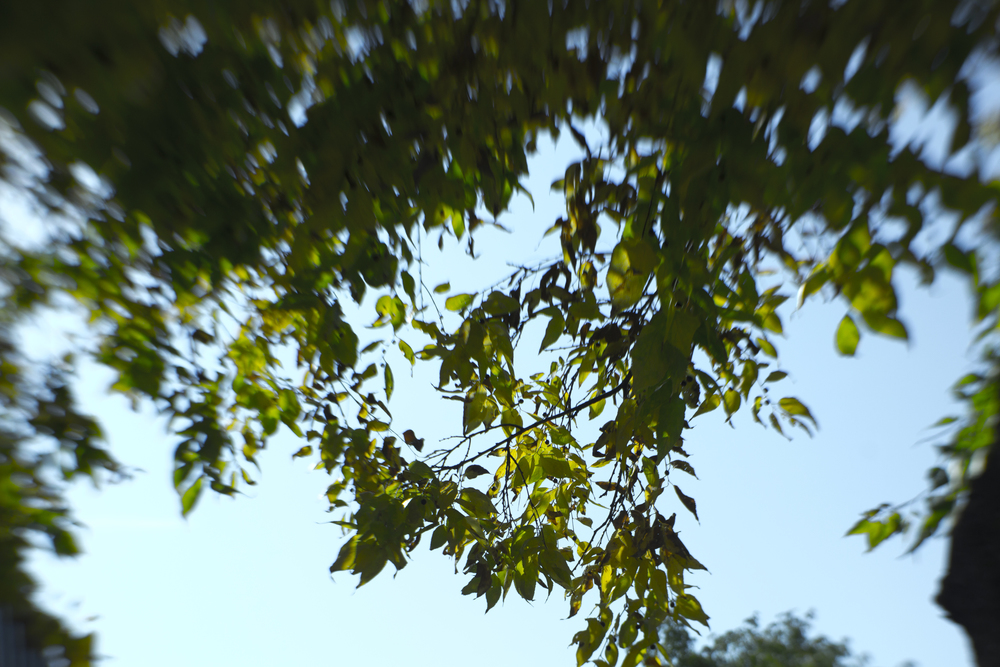 Leaves_Lens Baby Composer Test.jpg