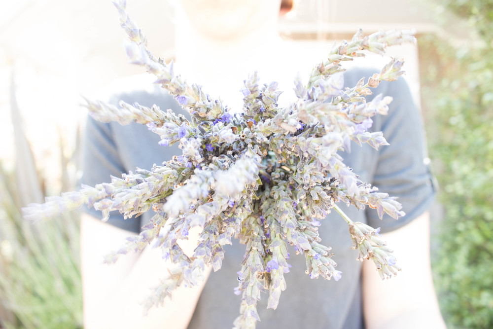 lavender-in-your-face