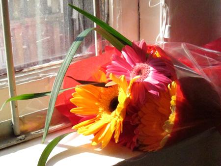 v_day_flowerssunlight1
