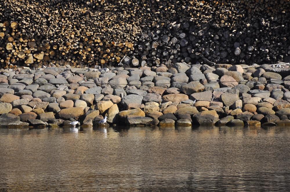 seagull texture 1.jpg