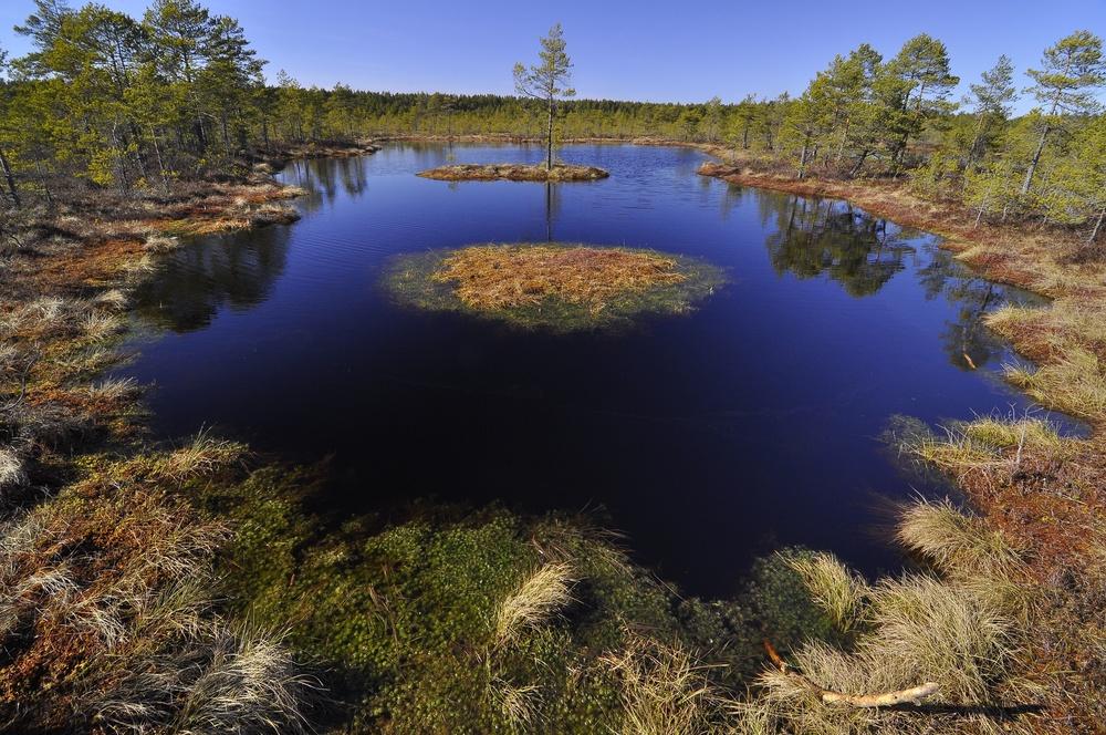 _Latvian Bog.jpg
