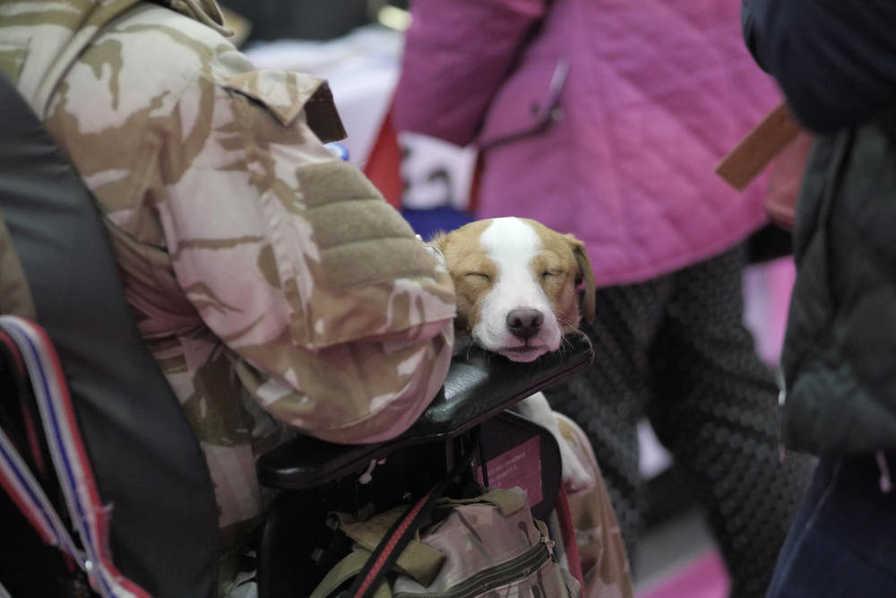 Puppies for veterans