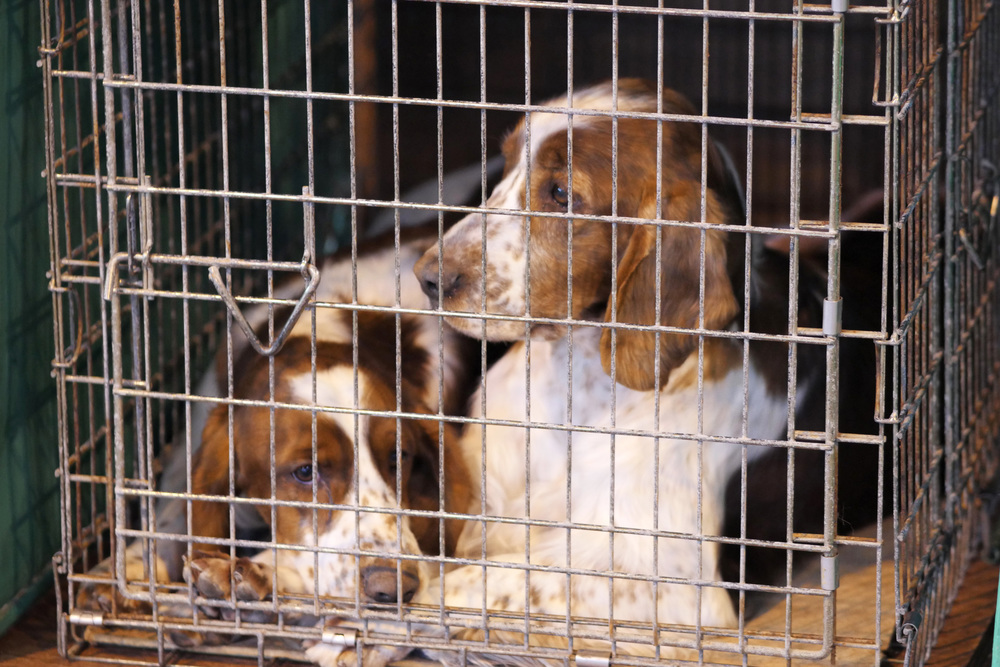 Unfortunately some of them - like those poor Spaniels - did have to wait a few hours in crates.
