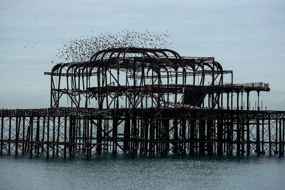 Brighton's home for birds