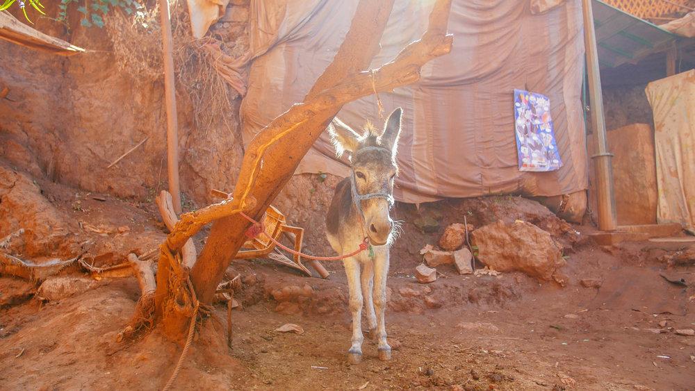 Donkey sunshine