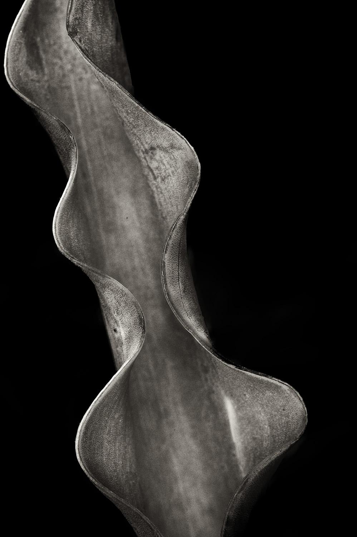 Bulb Curves