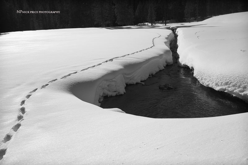 yellowstone winter