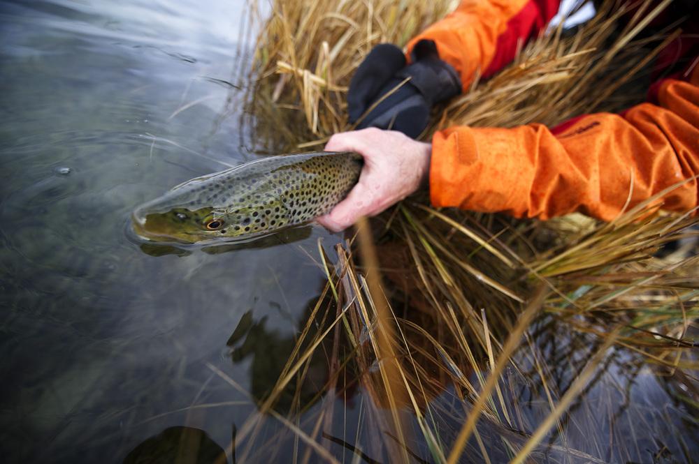 flyfishing_danhcreekdecember4_site.jpg
