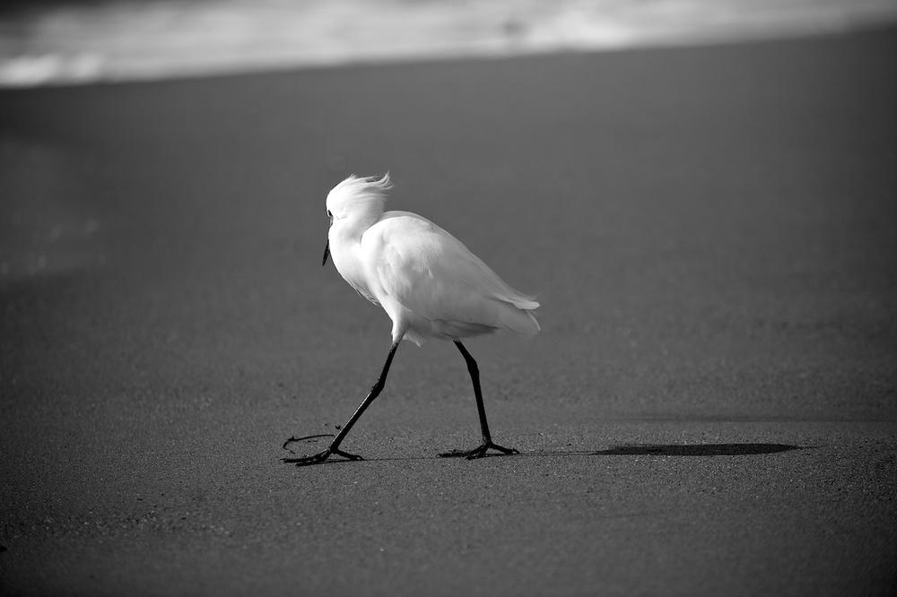 Wind & Egret