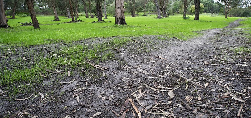 Eucalyptus Grove Pano. Santa Barbara