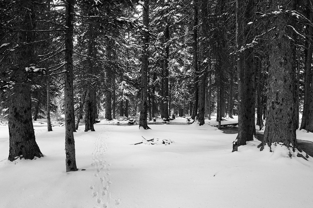 Summit Creek Campground & Coyote Tracks