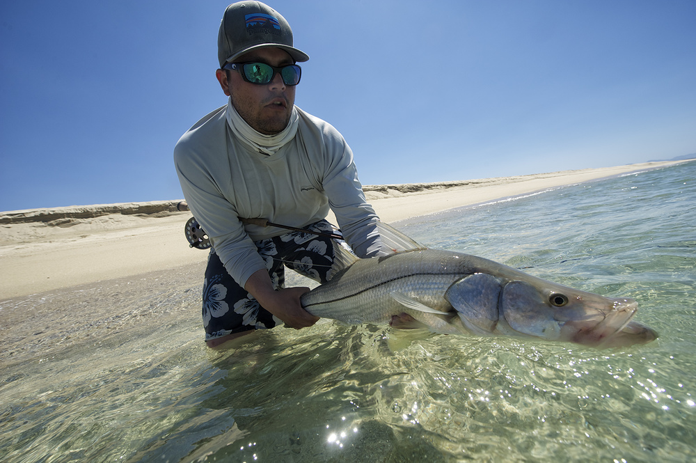 Hours of casting to uninterested cruisers along the beach pays off. Zac Mayhew, looking like a regular, hoists a fairly unusual  East Cape Snook.