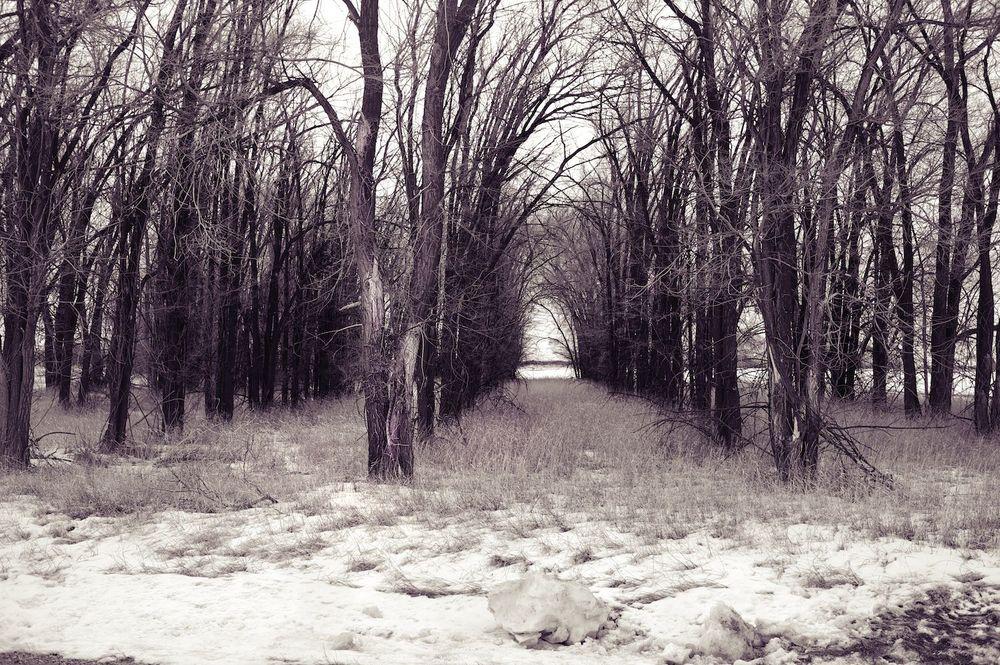 Trees. Early Winter. Idaho.