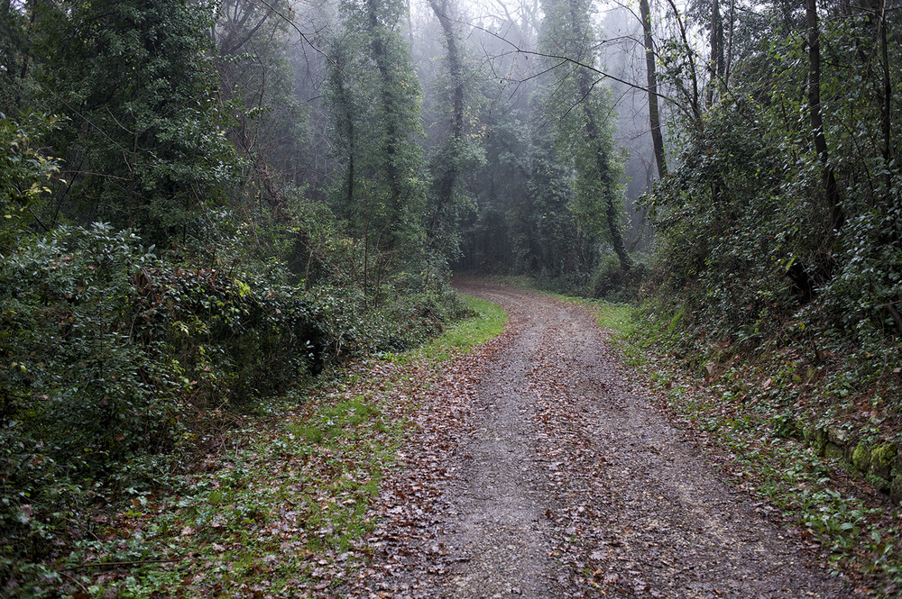 Dirt road & trees. Tuscany.