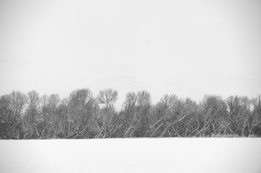 Winter Storm & Aspen.