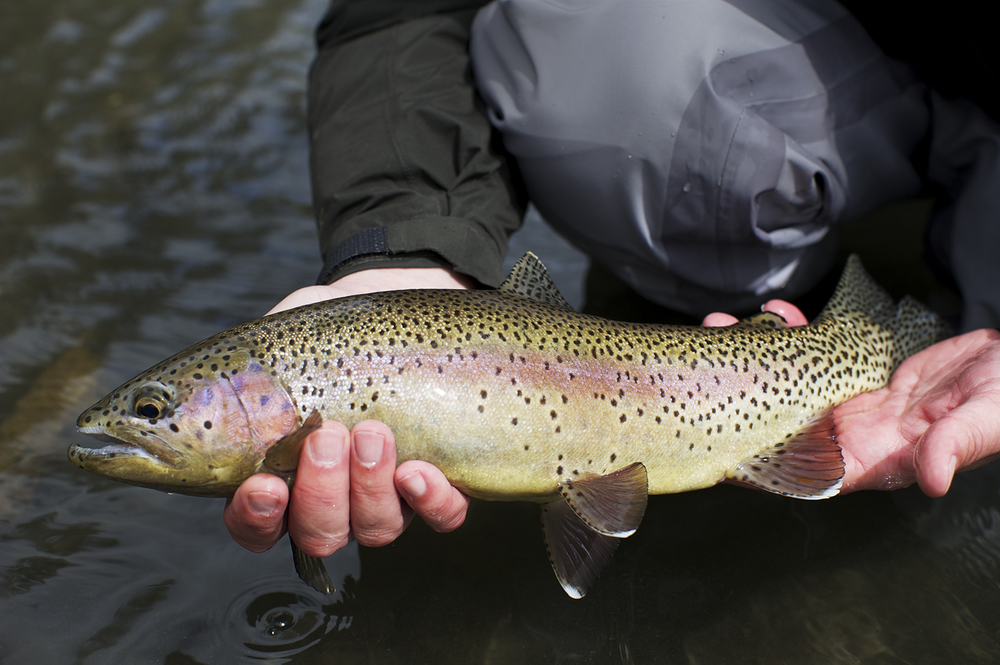 Lost River Rainbow
